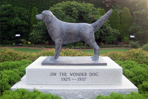 Jim the wonder dog. - TOWADOLLA ON FLICKR