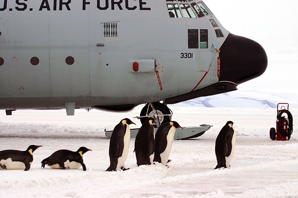Penguins around a C-130 Hercules cargo plane in Antarctica. Note the retractable skis, used for taking off and landing on the snow. - PHOTO COURTESY OF THE NATIONAL SCIENCE FOUNDATION