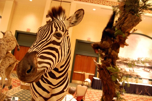 A zebra head also comes in at eye-level. View more photos here.