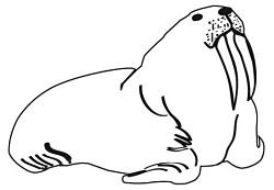 They are the walrus...