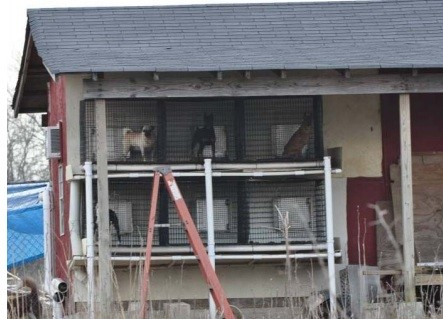 Puppy mill. - VIA HUMANESOCIETY.ORG