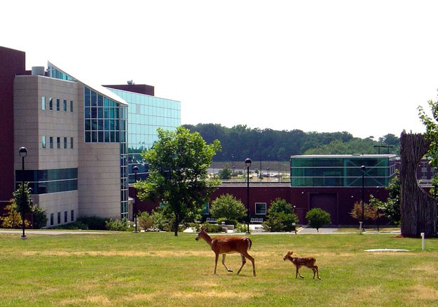 Even deer are safe at SIU-E. - IMAGE VIA