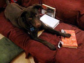 In heaven, your dog knows how to read.
