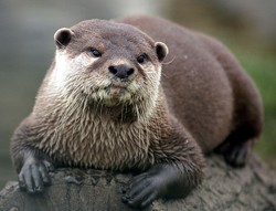 Otters have a lot of feelings. - COMMONS.WIKIMEDIA.ORG