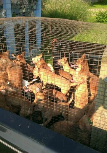 The dogs were rescued from being dumped like this on the side of a highway. - HUMANE SOCIETY OF MISSOURI