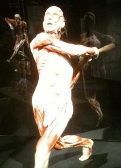 What Pujols would look like if he had, ahem, no skin in the game. - BODYWORLDS.COM