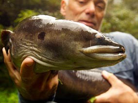 Jeremy Wade and one of his little river buddies. Nasty! - COURTESY OF THE DISCOVERY CHANNEL
