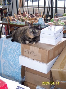 Index, Piece of Mind's bookstore cat, now out of a job. - IMAGE VIA