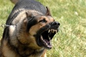 antonio_french_dog_bill.jpg