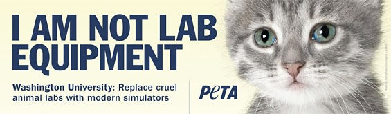 The ad the billboard companies refused to run because, PETA says, it mentions Wash. U. by name. - COURTESY PETA