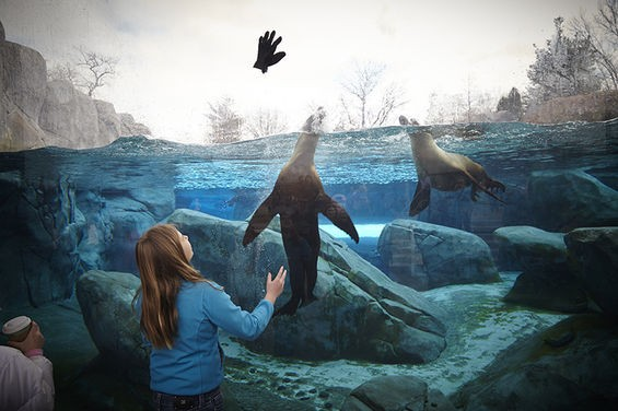 The sea lions are so special they get a disembodied high five. - STEVE TRUESDELL
