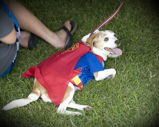 superman_1655.jpg