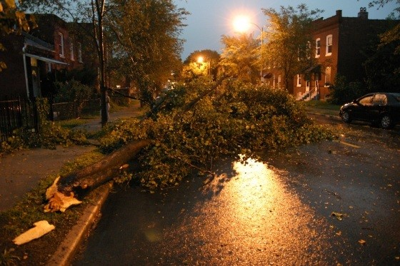 Last night's thunderstorm knocked over this tree onto Cherokee Street at Virginia Avenue. - PHOTO BY NICHOLAS PHILLIPS