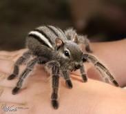 Meet spidermunk.