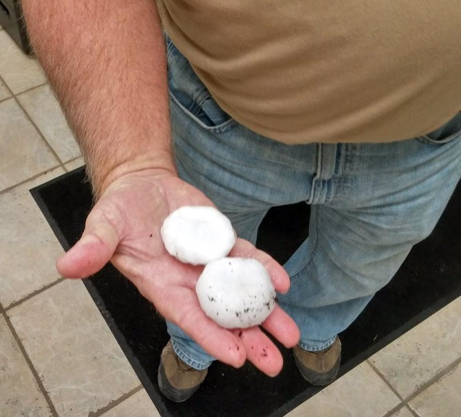 Property manager Rick Schmitt holds some of the biggest hail from this morning's storm. - CASSANDRA LANGLEY