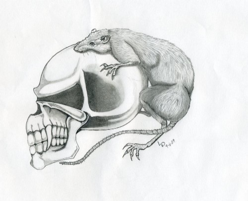 Skull with Rat, from Insider Art. - LARRY DANIELS