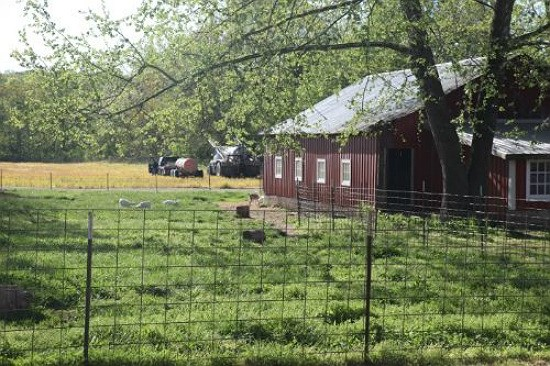 Baetje Farms bucolic fields where the goats can roam and play outdoors. - BETH FARROW CLAUSS