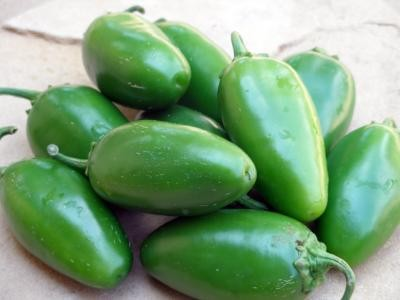 The new jalapeno variety is medium hot with large fruit. - PAUL BOSLAND