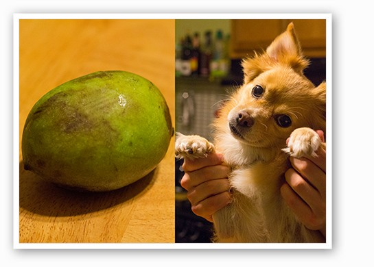 We compared the pawpaw to two pup's paws and found few similarities. | Mabel Suen