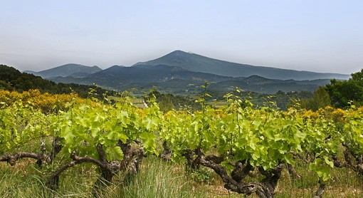 Mont Ventoux. Them there in the foreground is grapes! - JEAN-MARC ROSIER