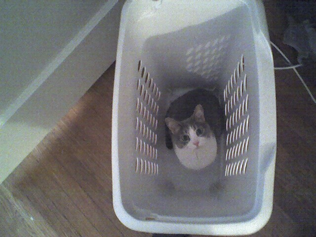 I'm in ur hamper, hiding ur Interwebz.