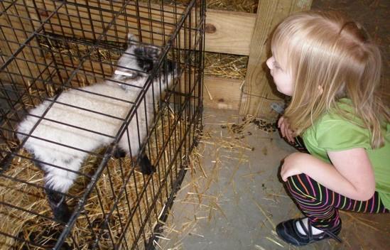 Sweet little lamb...gonna be good eatin'! - ROBIN WHEELER