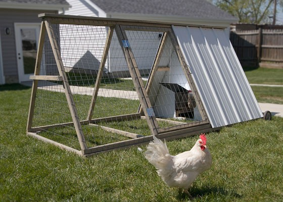 Meet The Easy Chicken A St Louis Start Up That Rents Backyard