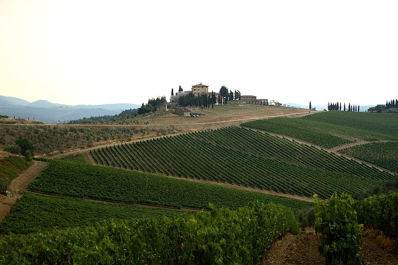 Vineyards in Tuscany, Italy - JOHN MENARD, WIKIMEDIA COMMONS