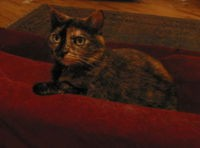 The birthday cat, older and wiser and plotting revenge.