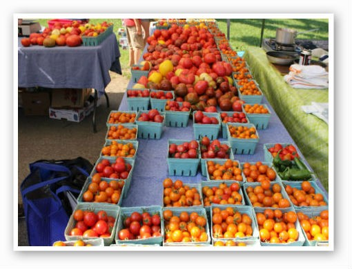 There's no shortage of tomatoes | Pat Kohm