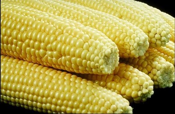 corn0915_thumb_565x370.jpg