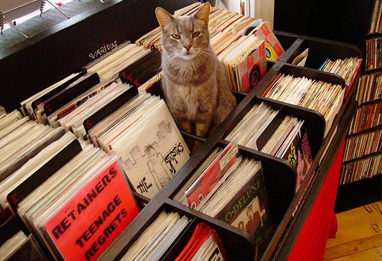 Beryl, the Apop Records store cat. - COURTESY OF TIFFANY MINX