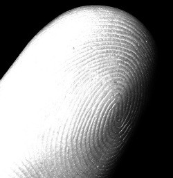 To fingerprint or not to fingerprint? - IMAGE VIA