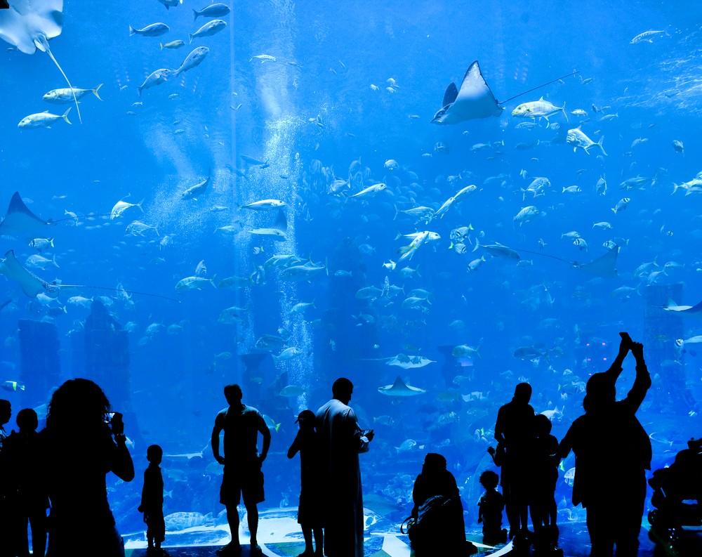 The New St  Louis Aquarium Is No Cause for Celebration