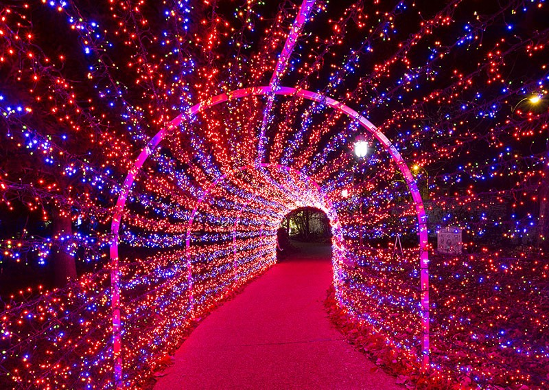 Garden Glow kicks off at the Missouri Botanical Garden on Sunday. - PHOTO BY DILIP VISHWANAT