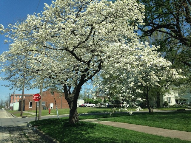The culture of Mississippi County is about as southern as Missouri gets, right down to an annual dogwood festival. - PHOTO BY DOYLE MURPHY