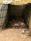 A cage inside the home of KKK leader Frank Ancona.