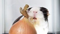 """Behold the Tearless Onion: Will Monsanto's sweet """"EverMild"""" whet a discriminating palate?"""