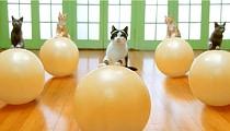 FWD: Funny Cat Videos Inside