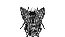 Huck's Bugs