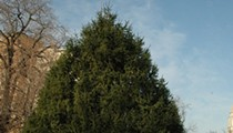 Governor's Mansion Looking for Tall, Uncut, Well-Branched Evergreen Holiday Tree