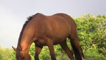 Horse Slaughter: Missouri Slaughterhouse Awaits State's Decision On Permit