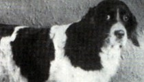 Jim The Wonder Dog (Who Predicted the Future!), Old Drum: Missouri's Official Dogs?