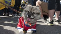 14 Adorable Dogs (And One Horse) Who Are Totally Ready for Mardi Gras