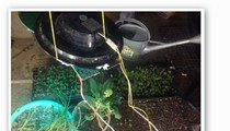 Green Means Grow: Gateway Garlic Turns Old Traffic Signals into Grow Lights