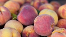 Eckert's Summer Peach-Picking Canceled Due to Winter Storm Damage