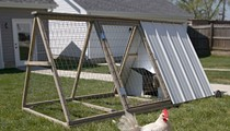 Meet the Easy Chicken, a St. Louis Start-Up That Rents Backyard Chickens