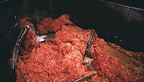 USDA To Start Testing for Six More Strains of <i>E. coli</i>