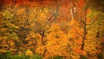 St. Louis Finally Hits Peak Fall Foliage Next Week