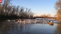VIDEO: Gang of Flying Asian Carp Mount Aerial Attack on Washington University Rowing Team